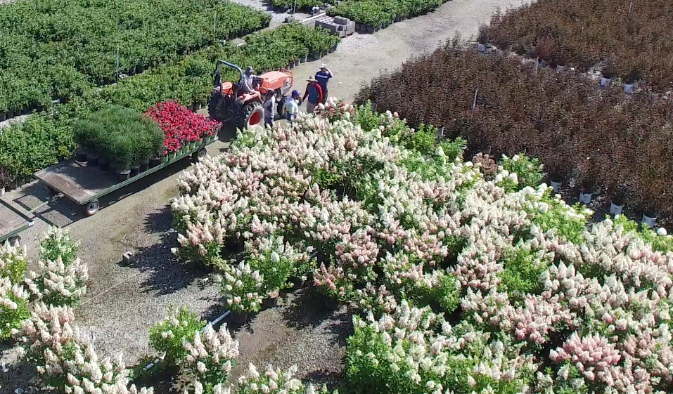 Located In The Northeast Corner Of Lake County Ohio Ridge Manor Nursery Offers A Full Line Zone Hardy Shrubs Perennials Gres And Trees To